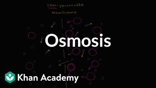 Osmosis | Membranes and transport | Biology | Khan Academy