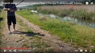 Ловили карпа, а поймали гадюку. Пруд в станице  Родниковская,. Кубань май 2019г.
