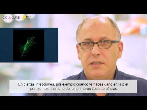 Gyógymód a szubkután paraziták ellen