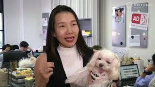 Собаки помогают снять стресс на работе