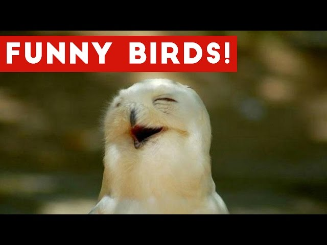 Funny Parrot & Bird Videos Weekly Compilation November 2016 | Funny Pet Videos