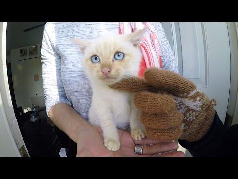 Fant forfrossen kattunge i hagen: – Han lever!