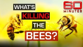 Could the extinction of bees be the end for humanity? | 60 Minutes Australia