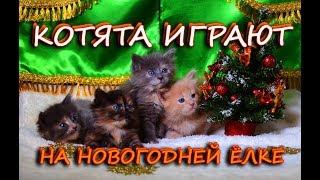 Котята играют на новогодней ёлке