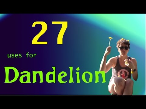 Video 27 Uses for Dandelion in 5 Minutes