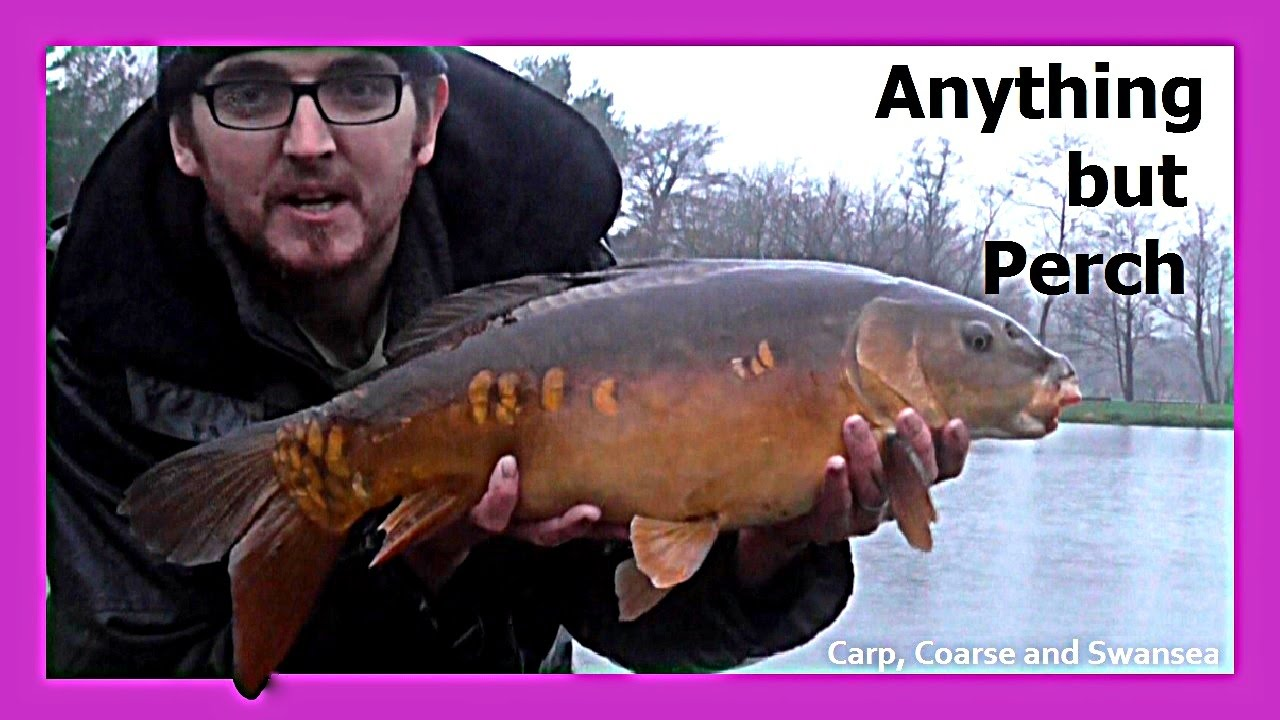 Anything But Perch. Carp, Coarse and Swansea. Video Blog 133