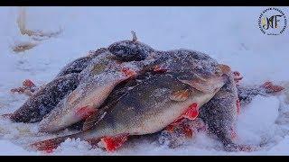 Рыбалка зимняя на озере ильмень
