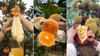 How To Cutting Fruits On Tree | Amazing Fruits Cutting Skills