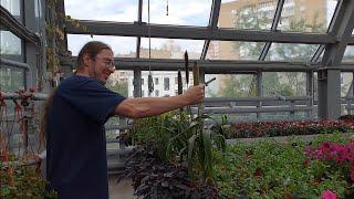 Немного занимательной ботаники от упоротых зоологов
