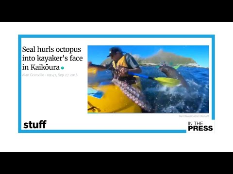 Man v Seal? Kayaker gets slapped in face by octopus-carrying seal in NZ