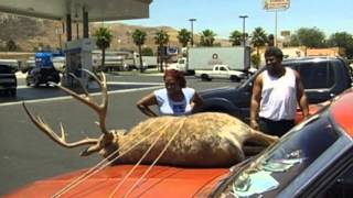 Deer on the hood prank