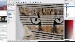 The Making Of Savannah Cat