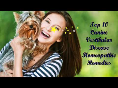 Video Homeopathic Remedies for Vestibular Disease in Dogs