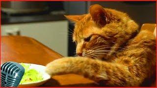 Приколы с котами #15 милые коты, lovely cats