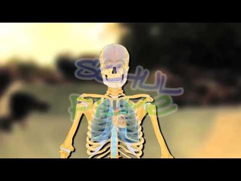 Die Rückenschmerz in den Rändern rechts