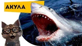 Наука для детей Животные   Акулы   Семен Ученый