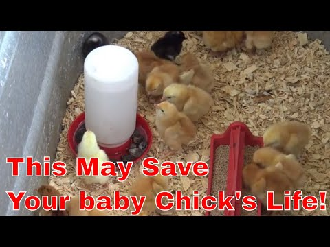 , title : 'How to raise baby chicks