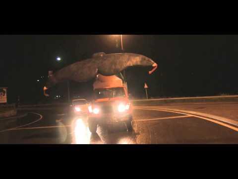 Avvistata una balena nel lago di Lugano