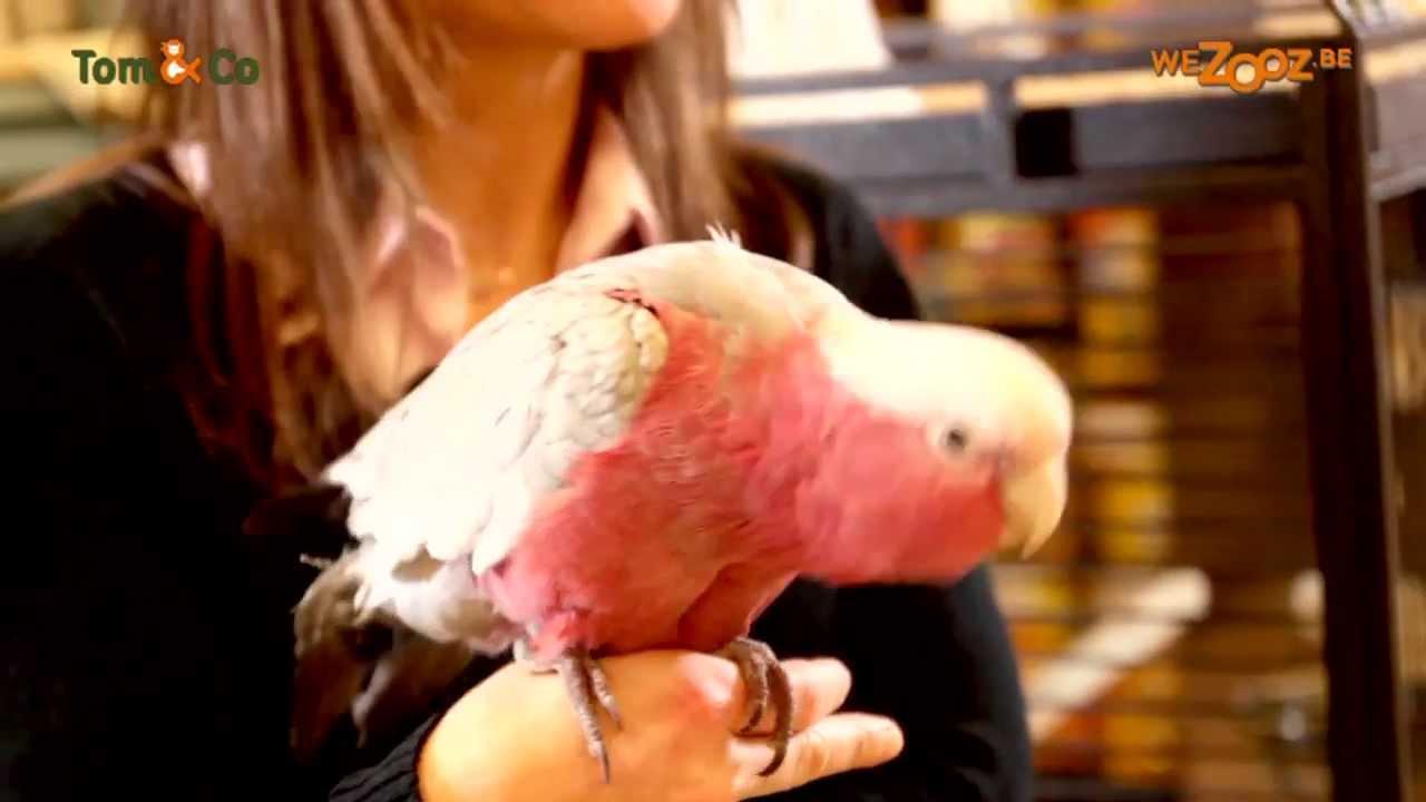 Spécial perroquet