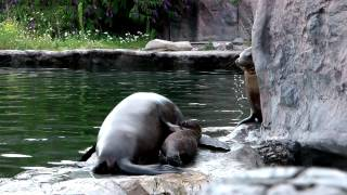 preview picture of video 'Zoom Erlebniswelt Gelsenkirchen [FULL HD]'