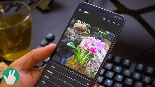 Nokia 9 Pureview Real World Camera Test (with Lightroom workflow)