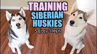 How To Train A Siberian Husky - 5 Easy Steps!
