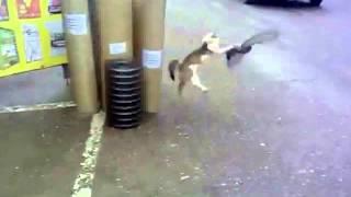 Смотреть онлайн Кошку сбивает газель
