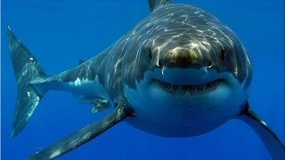 02 Неделя акул  Акулы ниндзя