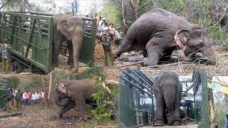 Trans locating an aggressive elephant !
