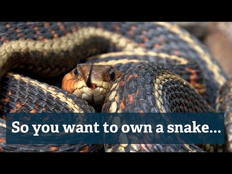 So you want to own a snake… - Thompson RIvers University