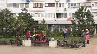 Около 400 новых саженцев роз заполнят клумбы на центральной площади Туапсе
