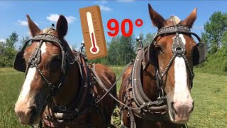 DRAFT HORSES: Can They Work In 90 Degree Heat???