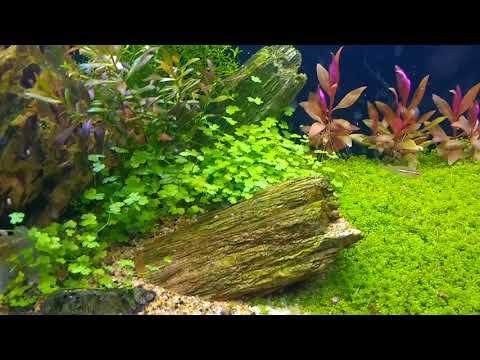 Review del acuario y sistemas del canal
