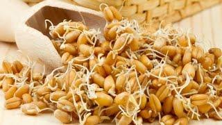 Как прорастить пшеницу для самогона правильно