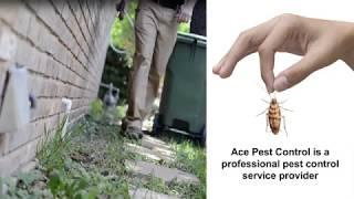 Ace Pest Control Solutions Brisbane