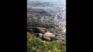 Рыбалка на полуострове рыбачий мурманской области