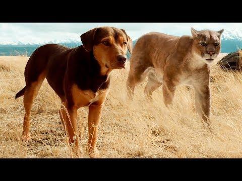 «Путь домой» (2019) — трейлер фильма