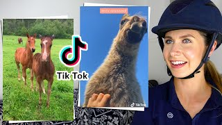 EQUESTRIAN REACTS TO THE FOALS OF TIKTOK! (cuteness Overload!)