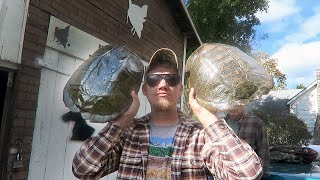 GOT MY TURTLE SHELLS BACK!!!