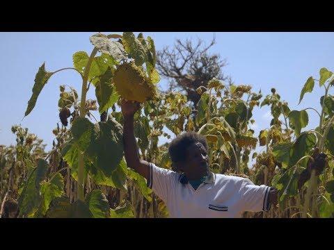 EcoACT project in Dodoma - GCCA+ Tanzania