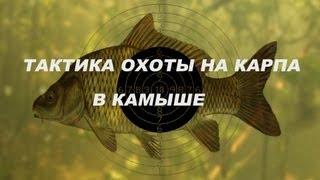 Особенности подводной рыбалки в речных камышах - Видео онлайн