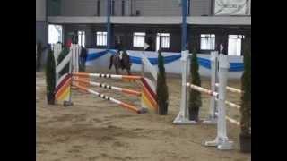 preview picture of video 'Heiniger-Pferde.com  Indoctro x  Golden Grannus KWPN St.'