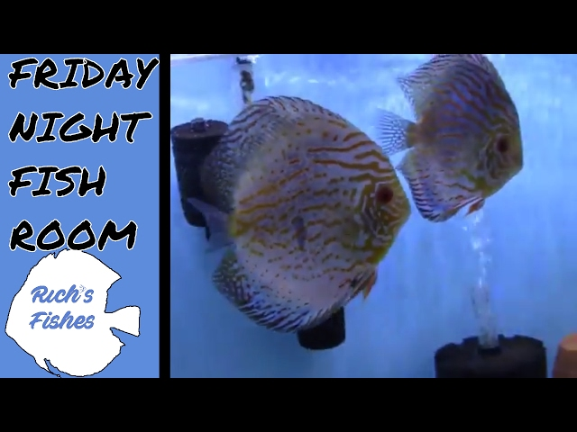 Friday Night Fish Room Tour