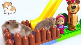 Сказка про джунгарских хомяков. Алиса и Дана в гостях у Маши и Медведь