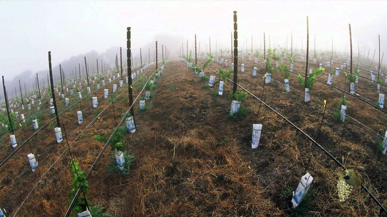Atlas Vineyard Management Development