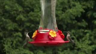 How to Set Up Your Hummingbird Feeder - Ace Hardware