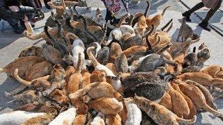 Japan's Cat Island – Incredible!