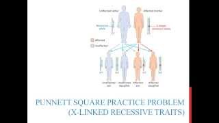 Punnett Square Practice Problems (X-linked Recessive)