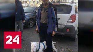 В Красноярске после 17 дней поисков нашелся пенсионер, вышедший погулять с собакой - Россия 24