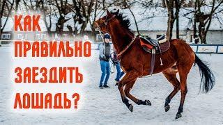 Как заездить лошадь Правильная заездка лошади Московский ипподром тренер Полушкина Ольга коневодство